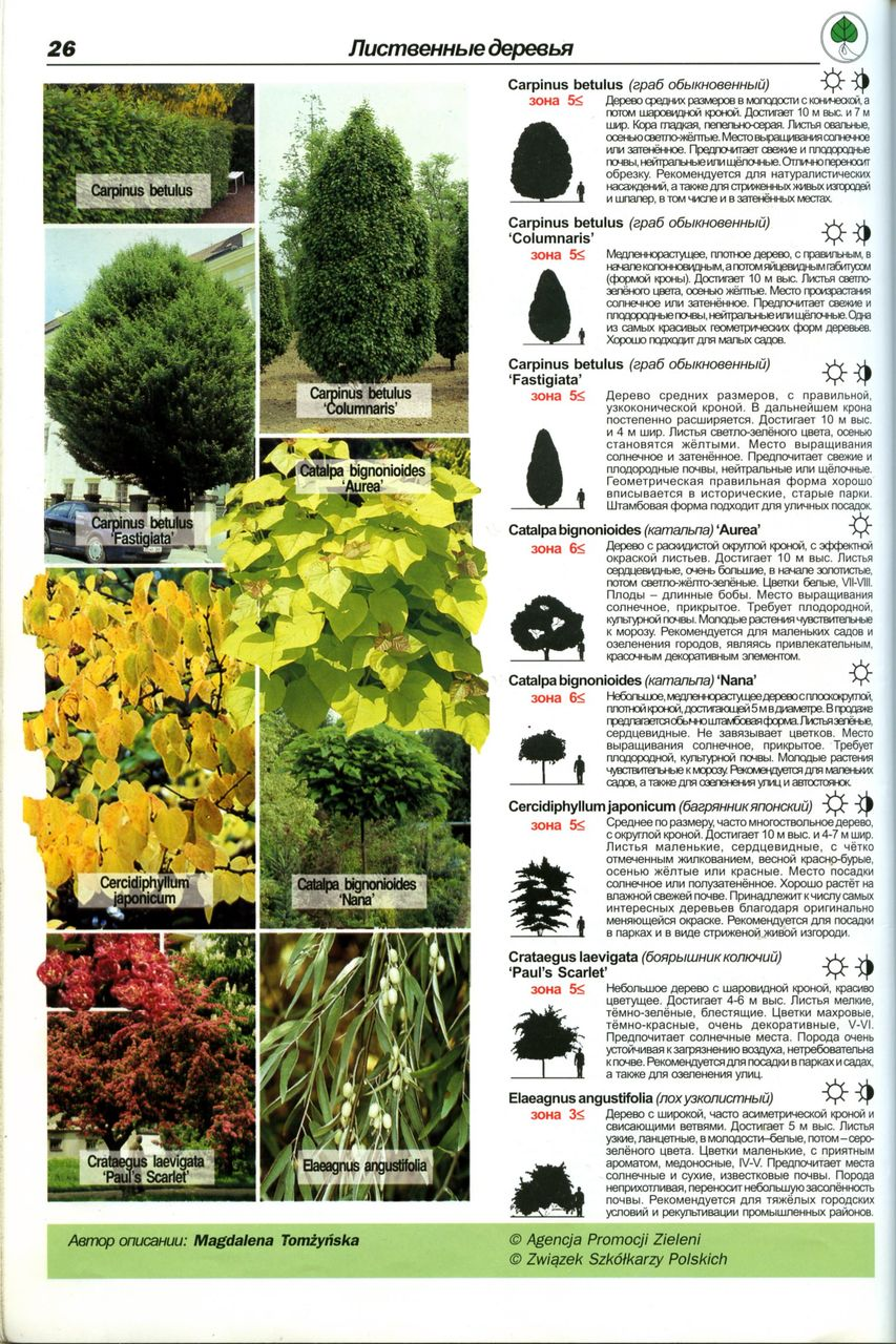 Лиственные деревья фото и названия