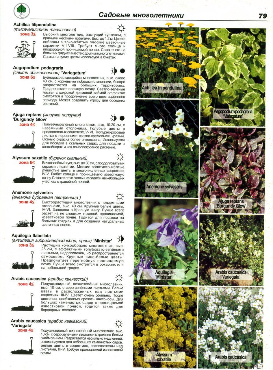Садовые цветы каталог и названием