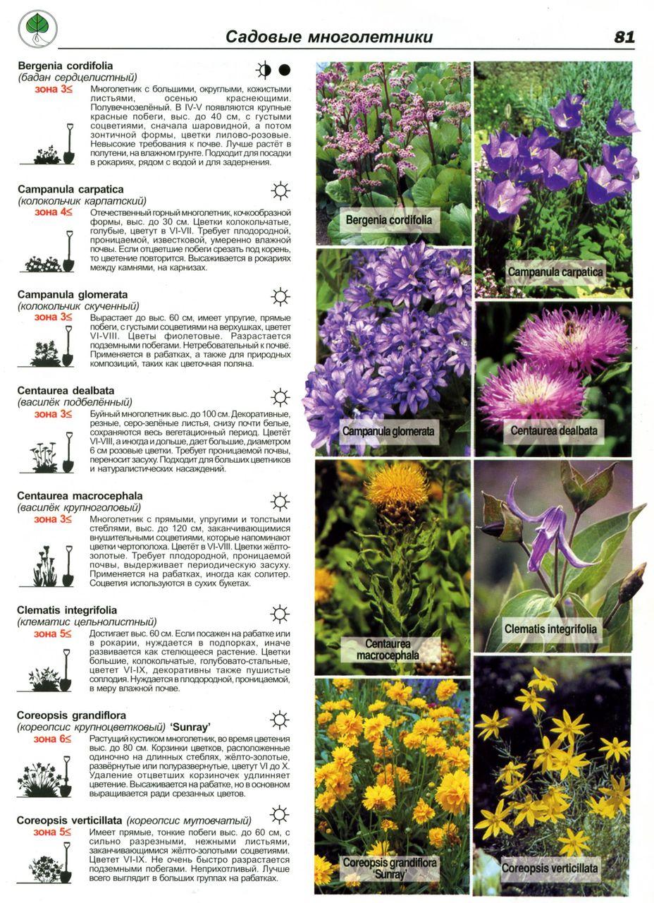Цветы, из которых можно составить букеты, их 94